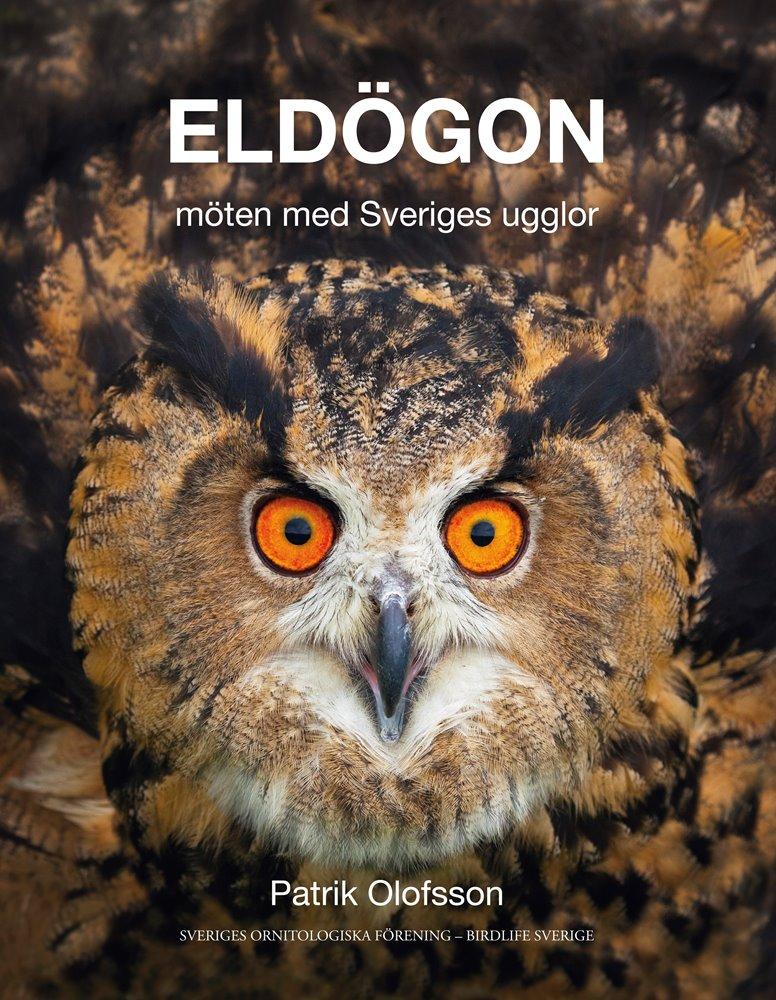 Föredrag 28/2: Eldögon – möten med Sveriges ugglor