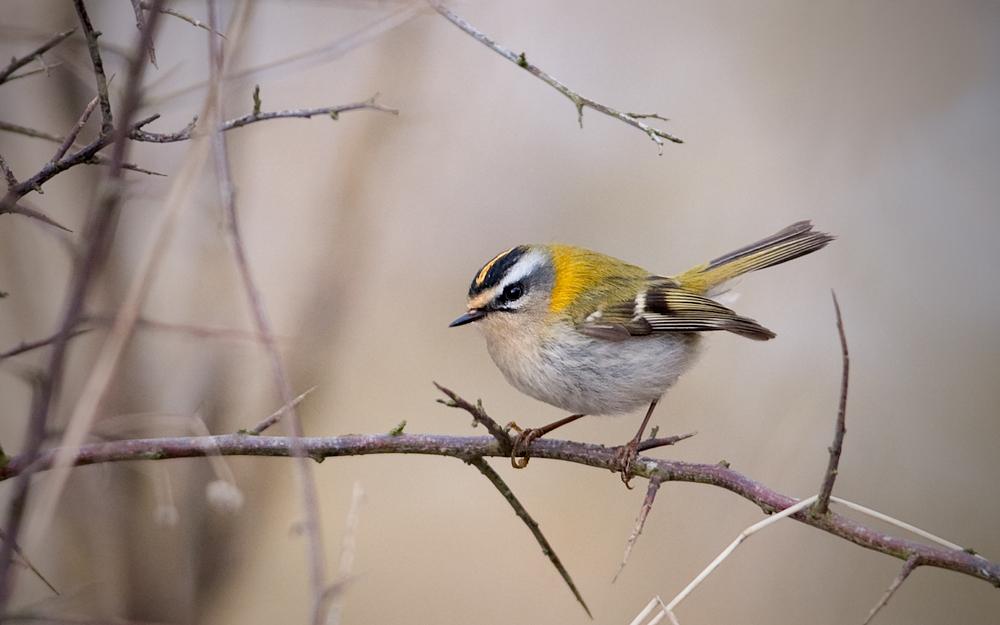 Vårfågelfest och kikarvisning 3 april