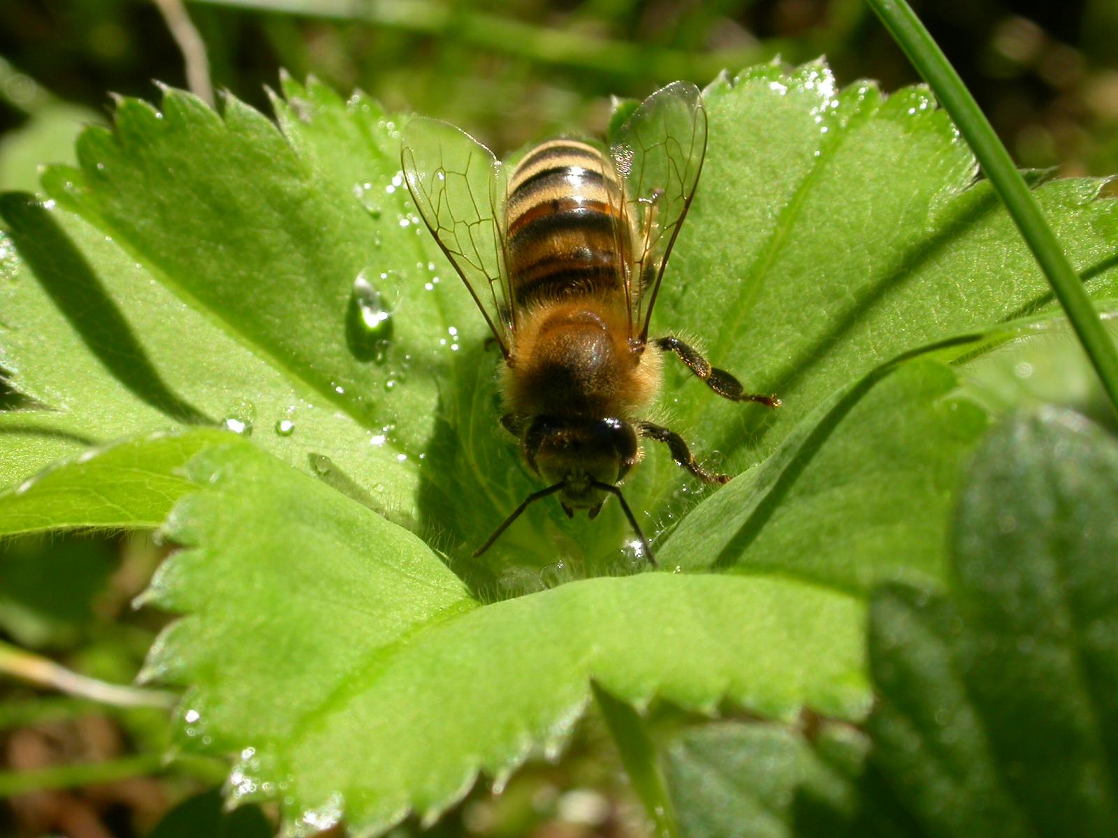 Föreläsning och workshop: Varroaresistenta bin – räddningen för biodlingen?
