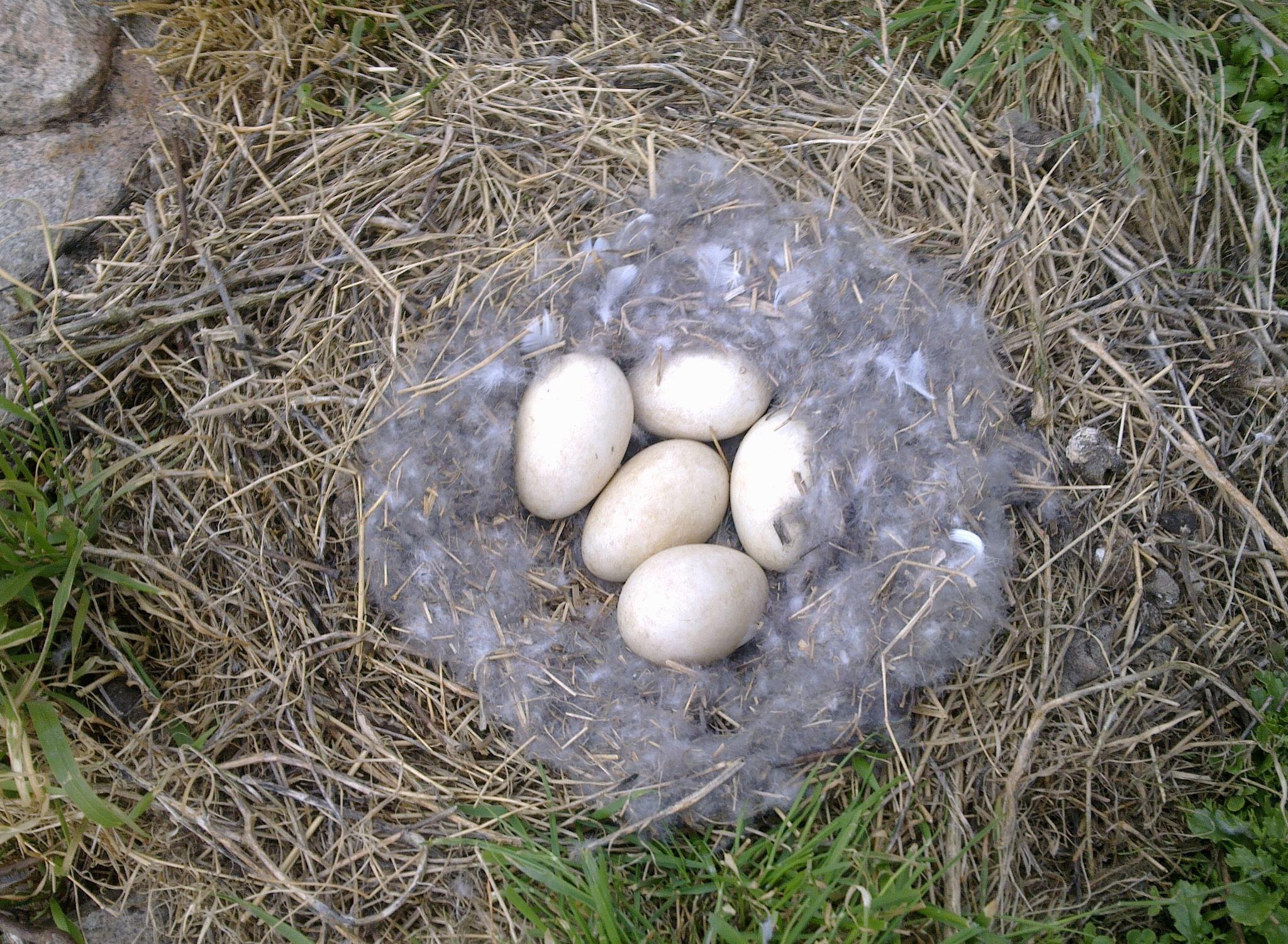 Påsken är en tid av ägg, ägg och åter ägg