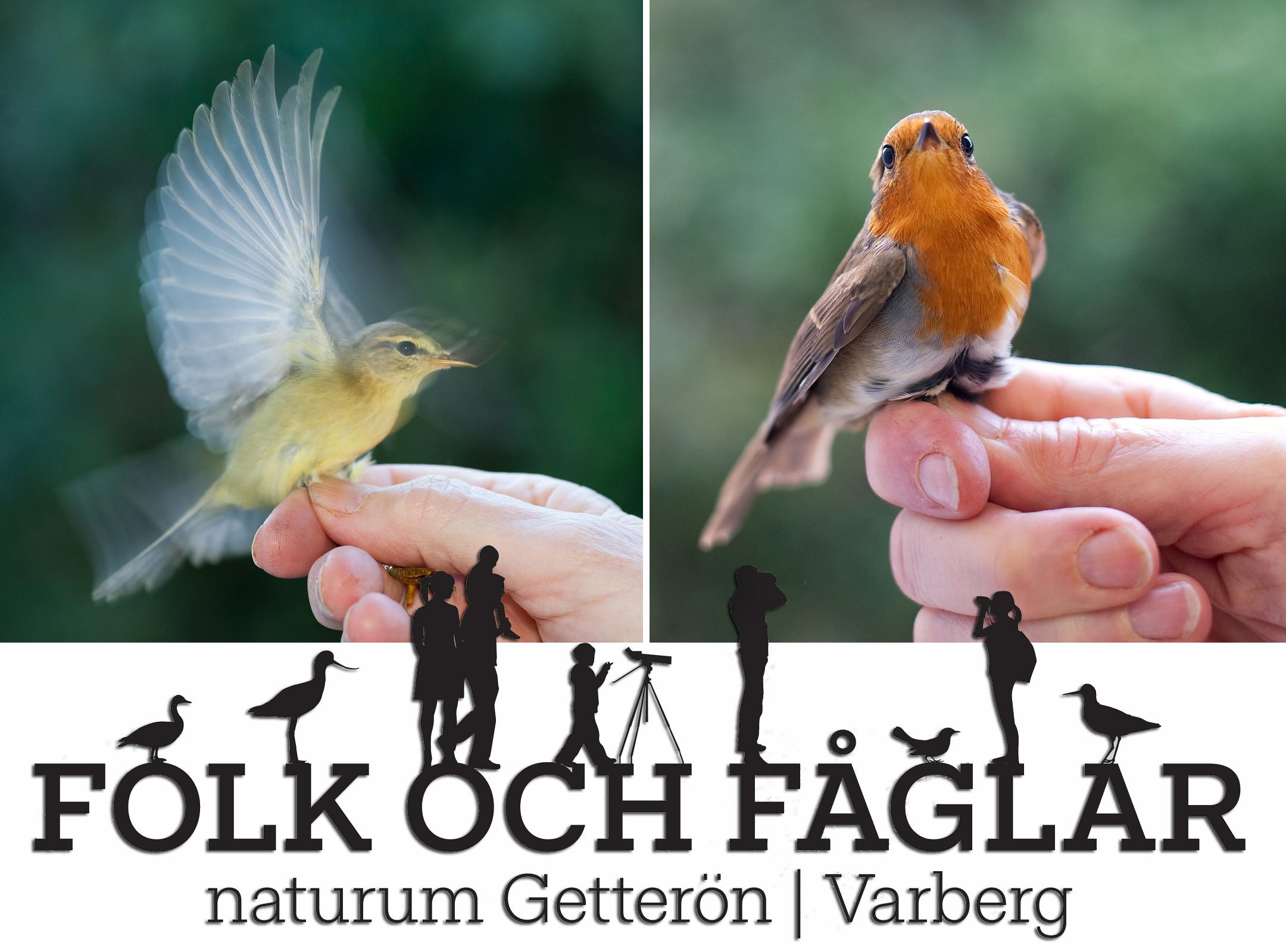 Folk & fåglar