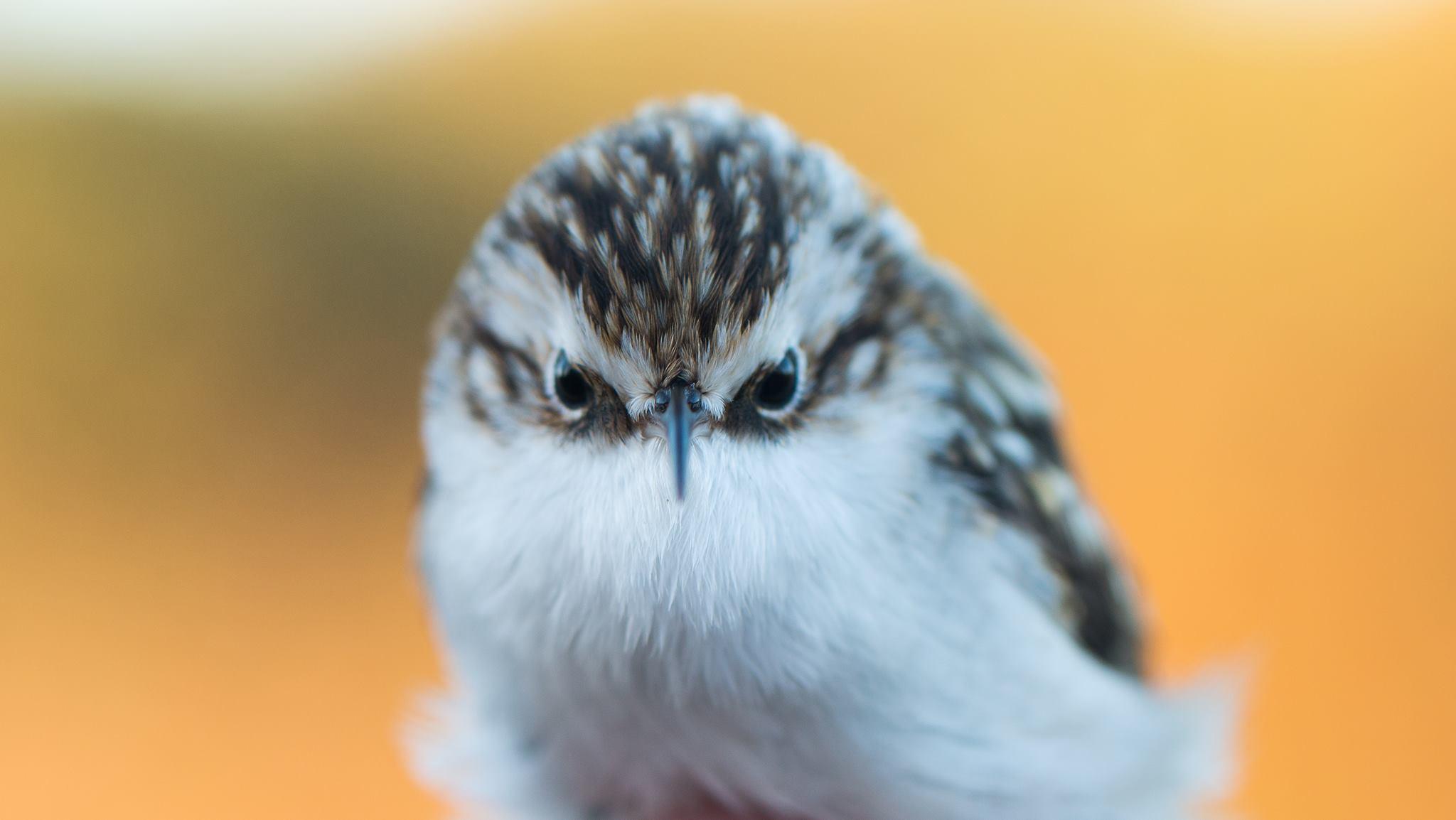 Söndag 28 januari kl 13.00-14.00 – Vinterfåglar inpå knuten
