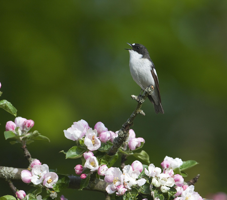 Vårfåglarnas helg 5-6 maj