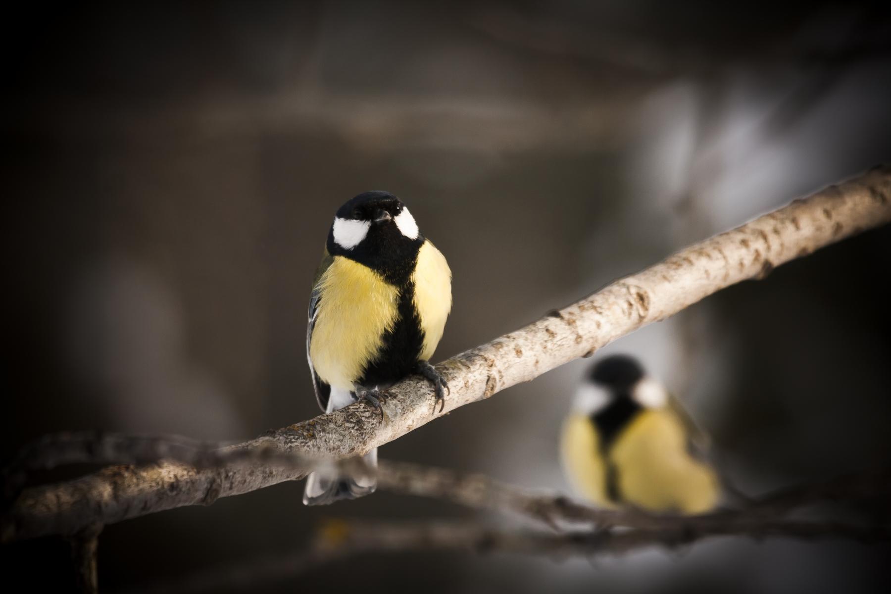 Helg i vinterfåglarnas tecken