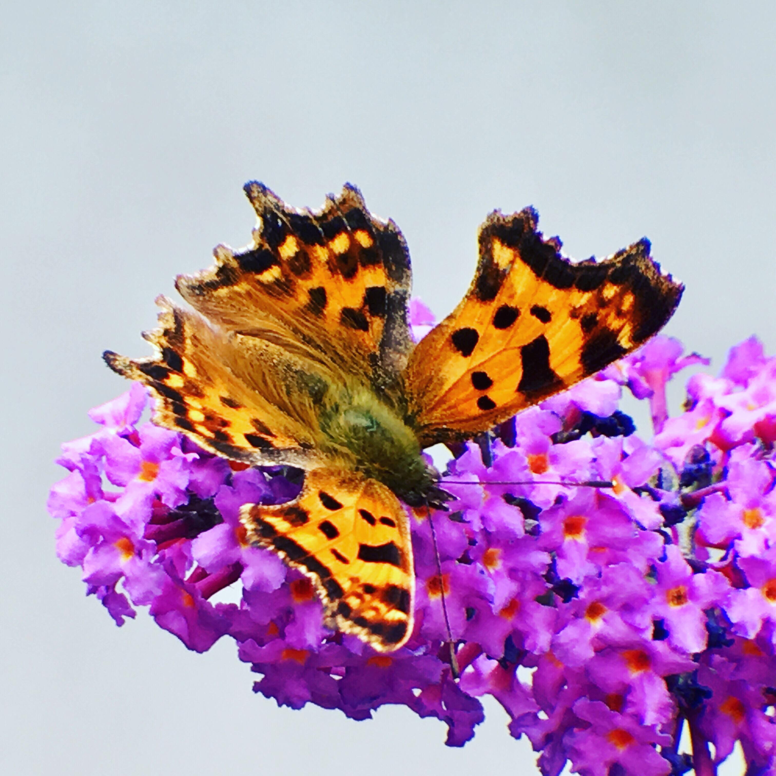 Än är det liv i fjärilsträdgården