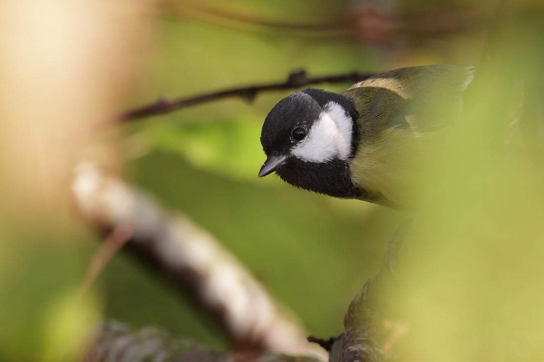 Premiär för fågelmatningen