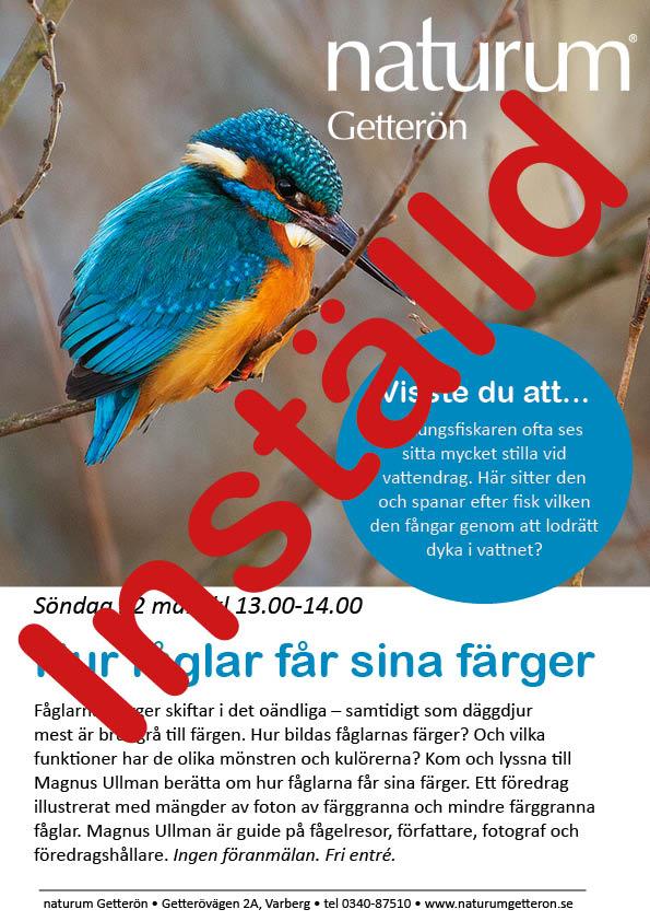 Hur fåglar får sina färger-föreläsningen inställd
