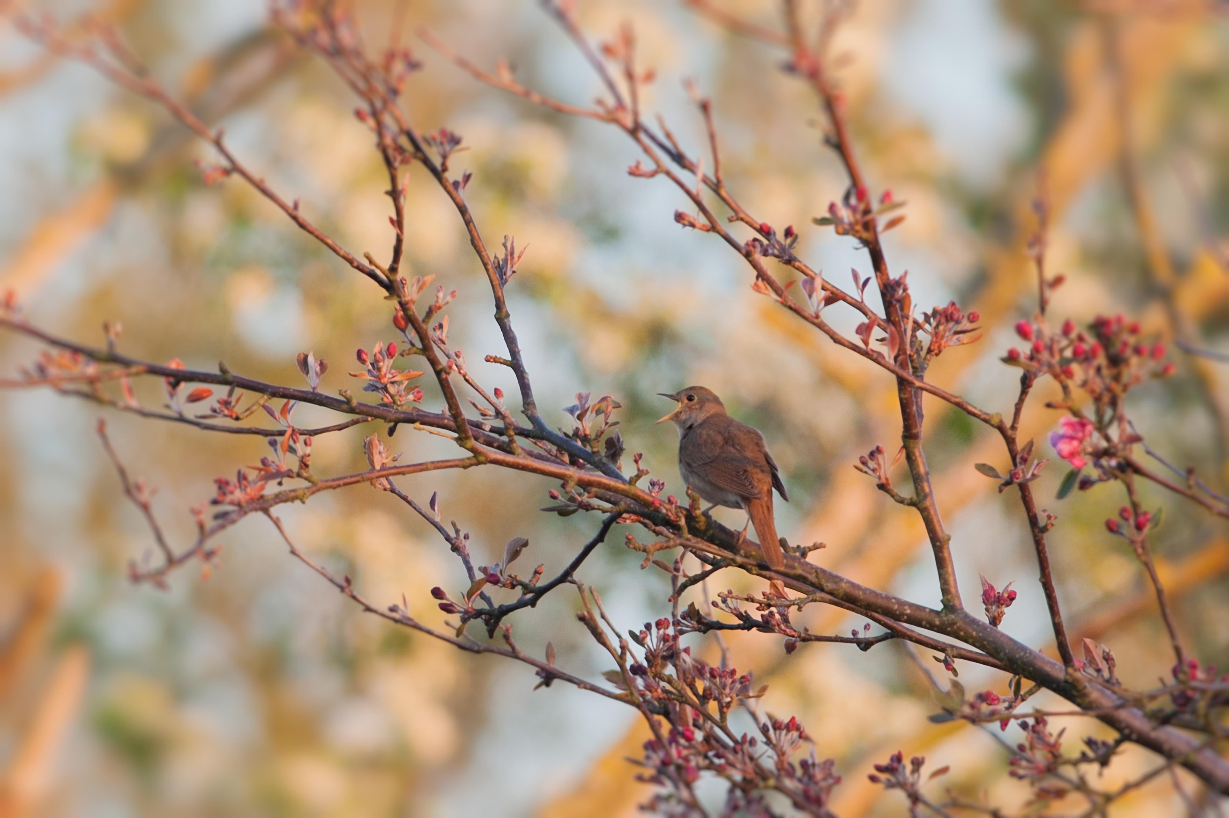 Fågellyssning söndag 17 maj