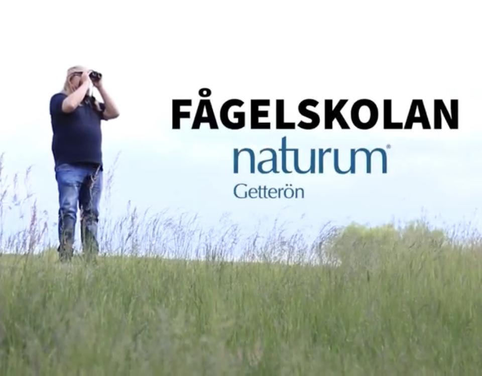 Fågelskola på naturum