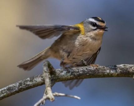Digital föreläsning om klimat och fåglar