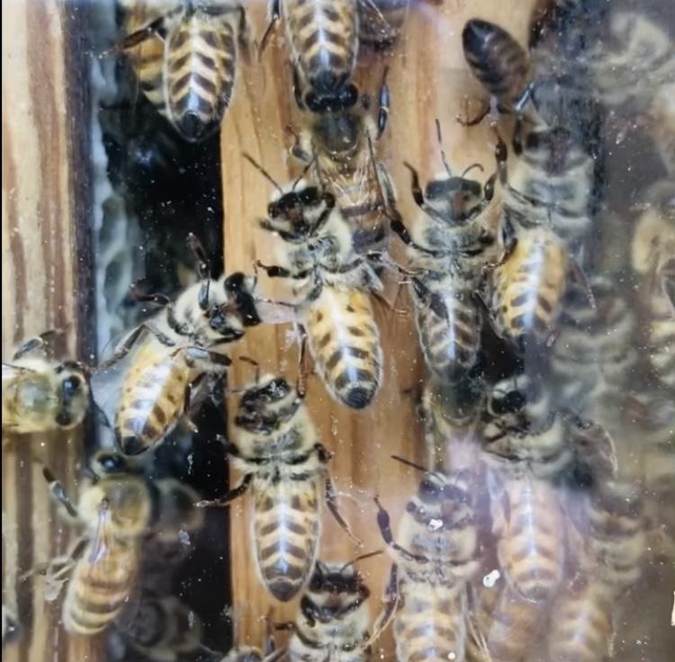 Kom hit och kolla på bin